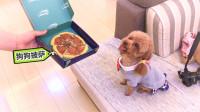 吃货狗狗看到披萨,眼神亮了!