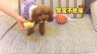 给狗狗吃榴莲,狗狗的反应太搞笑了!