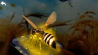认识蜜蜂等8种昆虫动物04-宝宝识动物学拼音汉字 识果蔬动物 亲子早教儿歌舞蹈