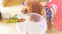 宠物的最新技能,狗狗变身洗碗机!