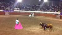 手握长矛的斗牛士刺向公牛,连刺两次,最终刺入公牛背部!
