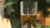 在薄荷糖中加入硫酸,会产生什么现象?这结果比魔术还神奇!