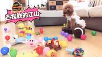 狗狗看到扫地机,以为是给它买的玩具!