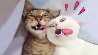 不敢养猫的一百个理由,让人根本HOLD不住!