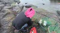 赶海收地笼就是豪气,中华锦绣龙虾大石斑鱼一窝端,看的真爽!