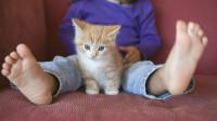 猫咪为什么喜欢跟人睡?知道真相的我,半夜爬床头也忍了