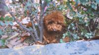 傻狗狗被麻麻骗到草丛里出不来,再也不信你了!