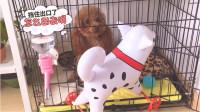 狗狗都这么胆小吗?碰到玩具狗狗都吓的不敢动!