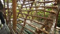 荒野生存之建造树屋