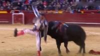庆典变悲剧!斗牛士出意外被公牛顶飞猛摔