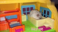仓鼠在家吃着零食看着电视,真是会享受啊!