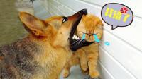 汪星人绝地反击:小猫咪你别跑!