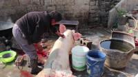 农村大叔杀猪40多年,村里办喜事用猪肉,他一人就可以搞定!