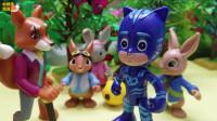 比得兔玩具故事:比得兔的新朋友猫小子,耶,以后不怕狐狸先生了!