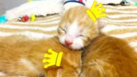 假装定格动画:一切以大橘为重,超萌的小橘猫崽