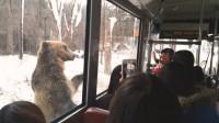 """愤怒!棕熊""""双脚""""直立行走似人类 竟是为供游客拍照取乐"""