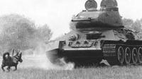 动物奇兵,苏军训练反坦克军犬,一场战役炸毁德军300辆坦克