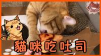 【巧克力】『橘子冰的日常』- 猫咪吃吐司?