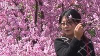 金山田野百花节:梅花玉兰争奇斗艳  踏青赏花游人如织