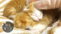 假装定格动画:最强撸猫,出生第二天,超柔软