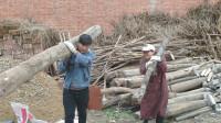 农村小伙的一天,看见老公扛这么大的木头,老婆不服气也想试试