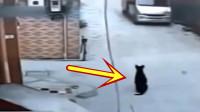 大黑狗正蹲在门口休息,面包车冲了过来,想躲都来不及了!