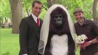 老外恶搞,新娘、新郎拍照,新娘变成大猩猩,吓坏路人