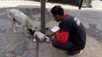 为了救治幼崽,母狗在大街上不断嚎叫,一名男子帮助了它