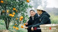 """他靠种植水果成60万农户的""""领头人"""":每天要接上百个电话"""