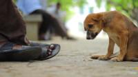 狗狗双腿残疾被别人欺负,陌生人的一块饼干,却让它找回自信了