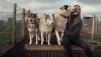 为什么单身女性都爱养一条大狗呢?原因让人热血沸腾!
