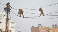 猴子爬到高压电线杆上,瞬间被电成火猴,镜头拍下全过程!