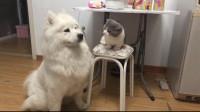 猫:咋的,我是没给你打痛么!