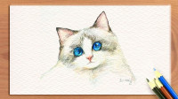 可爱的布偶猫带你走进彩铅画,精细的绘画表现力,让孩子爱上神奇的彩色铅笔