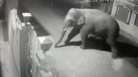 大象硬闯民宅寻找食物 金属大门像纸糊一样