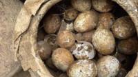 2500多年墓葬里挖出春秋时期鸡蛋 几乎完好无损