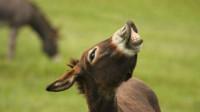 12星座最像哪种小动物?金牛座像驴,哈哈哈哈