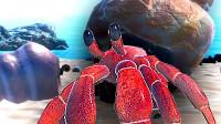 【小熙解说】模拟寄居蟹 你见过寄居蟹壳里面的东西吗?