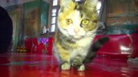 神曲《学猫叫》演唱者:小潘潘和小峰峰