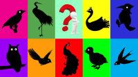 认识啄木鸟先生