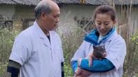 分公母赚钱的陆川猪:大山里的宝贝