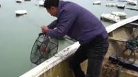 """农人捕鱼:大叔赶海收螃蟹笼,没想到抓到一条近十斤的""""大货"""",发财了!"""