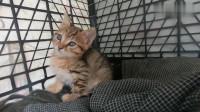 男子发现了一只调皮的流浪小橘猫,还把它带到他的收养所,真善良