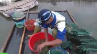 户外赶海:夫妻俩收地笼抓了这么多海鲜,拿到市场上被抢购一空!-