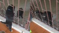 泰国一猫帮助小狗钻栏杆一起玩耍