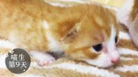 假装定格动画:第9天,三只全部睁眼了,你们好,TFcats