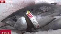 河南郑州:蓝鳍金枪鱼到港  新郑国际机场成为澳大利亚金枪鱼中经分拨基地