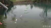 搞野:小莫用闲置的瓶子制作自动钓鱼神器,号称长江钓,捕鱼效率太牛了