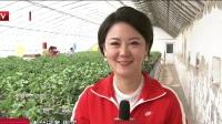 第七届北京农业嘉年华精彩纷呈  草莓采摘欢乐多