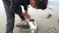 """三农:渔民赶海,小伙捡到一条大鲈鱼,还是""""买一送一"""""""